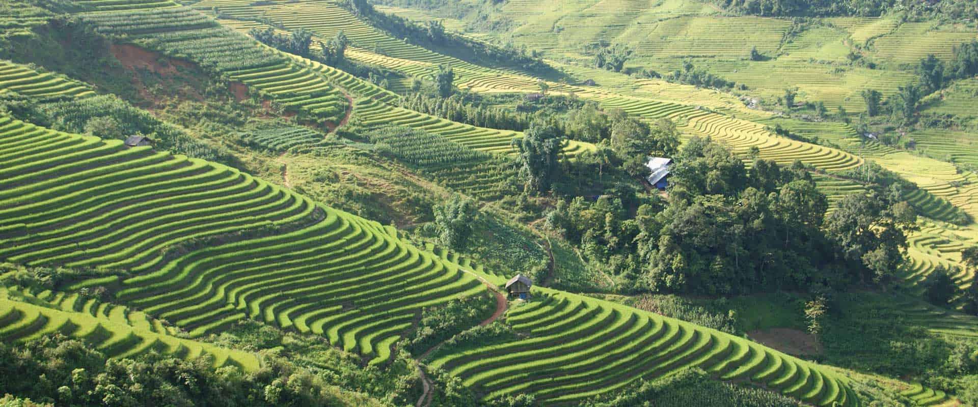 les rizières à Sapa